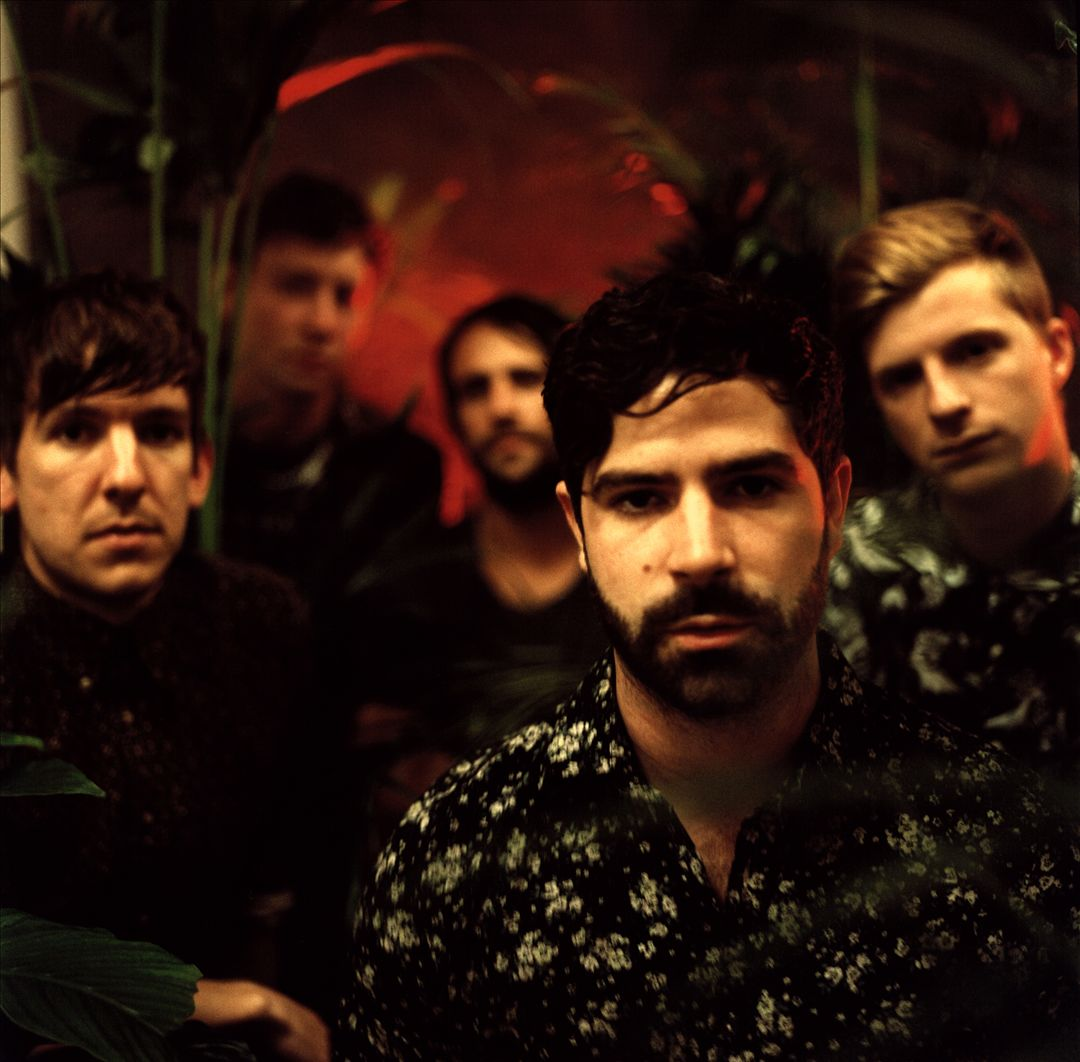 Picture of Foals